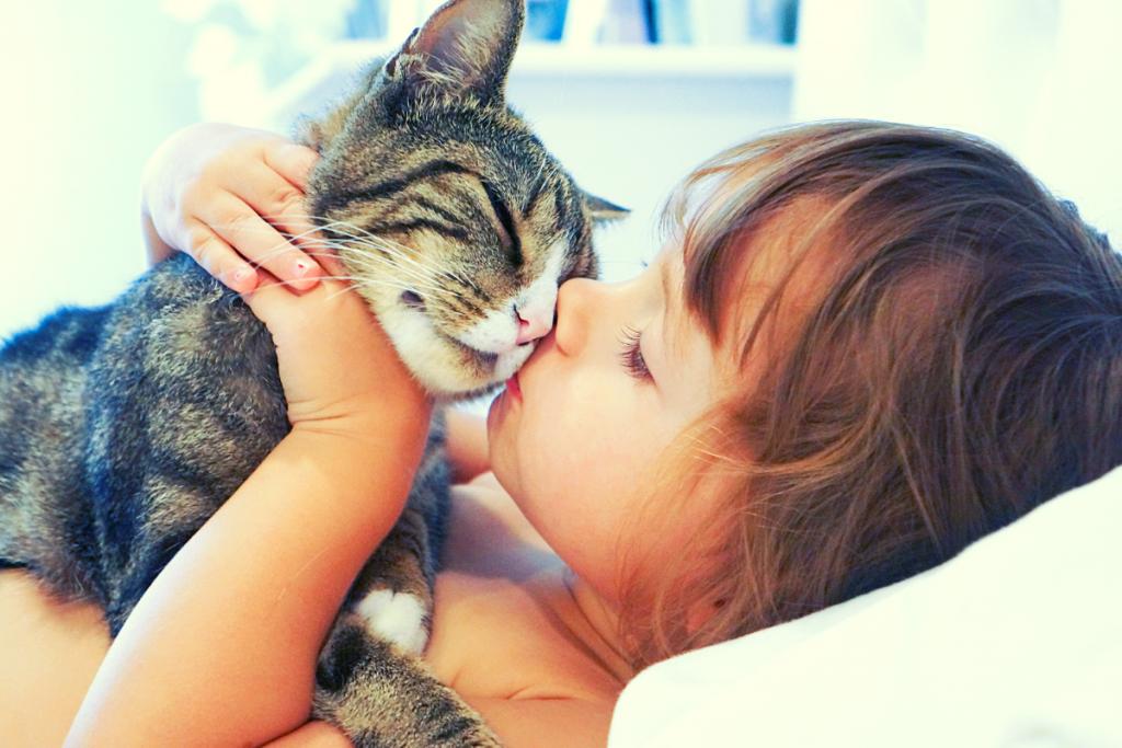 gatos para niños