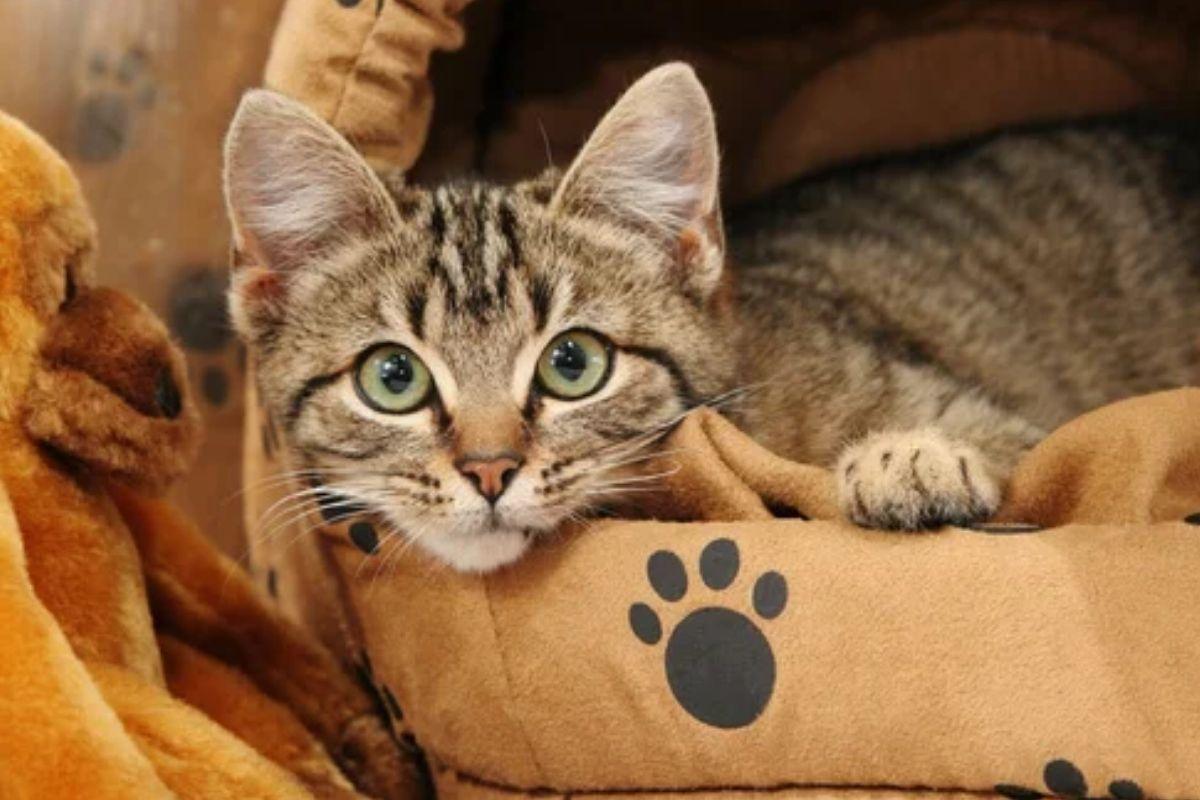 accesorios para gatos-cama