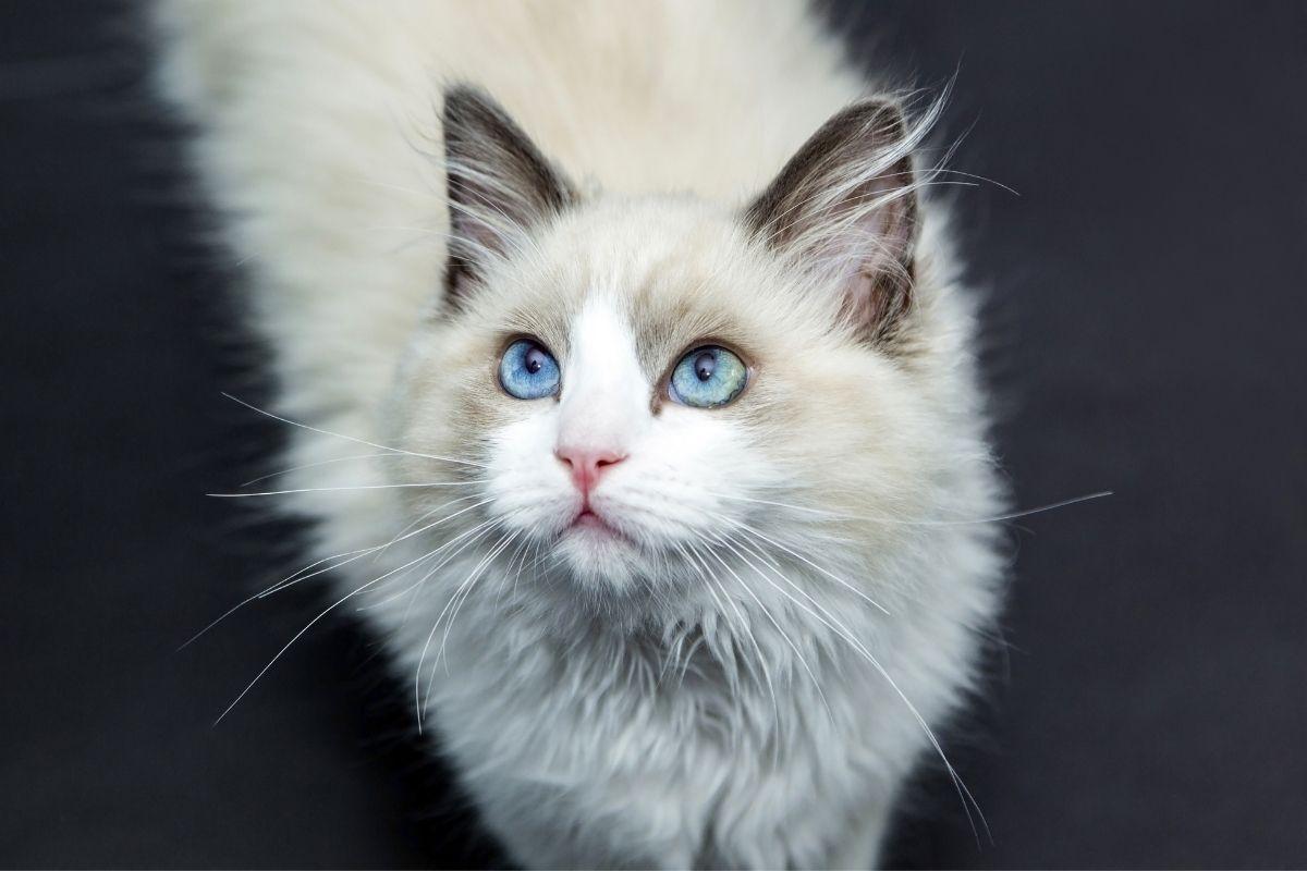 lo que los gatos quieres-portada