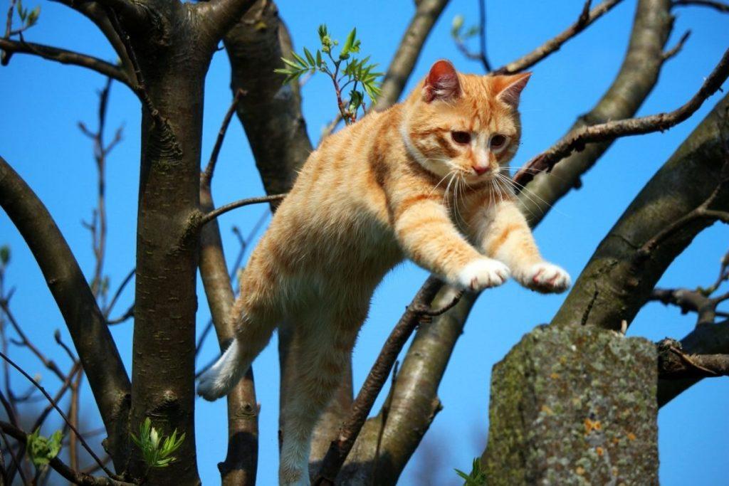 7 vida de los gatos
