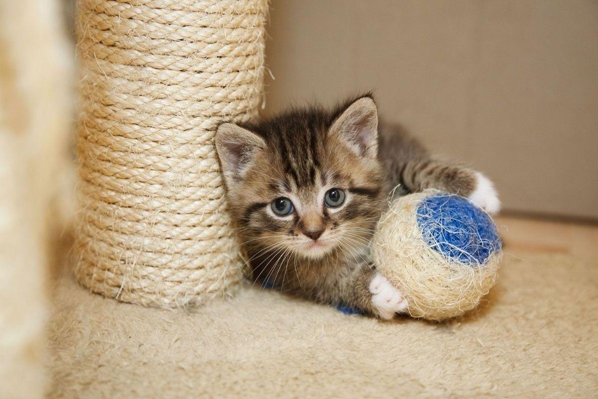 rascadores y postes para gatos