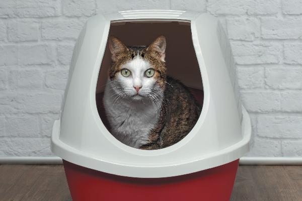Un gato en una caja de arena.