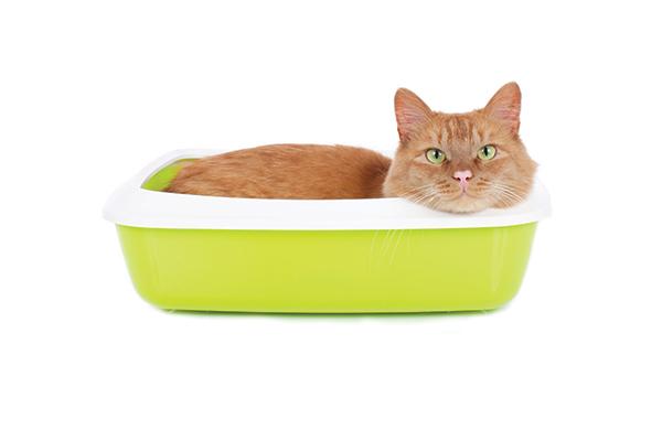 Un gato atigrado anaranjado cuelga en una caja de arena amarilla.