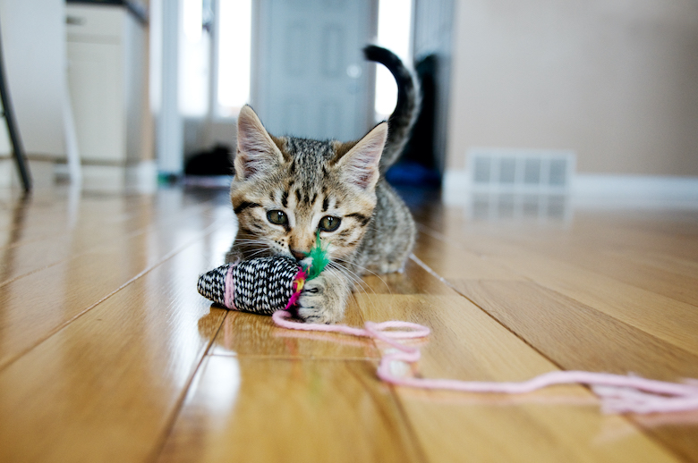 ¿Qué edad debe tener un gatito antes de la esterilización?